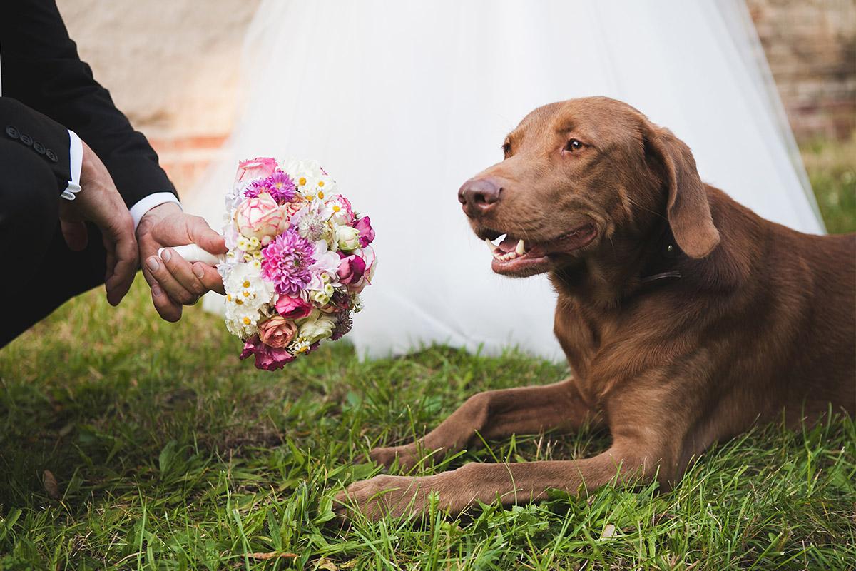 Hochzeitsfotografie mit Hund von professionellem Hochzeitsfotografen Berlin auf Schloss Kartzow © Hochzeitsfotograf Berlin www.hochzeitslicht.de