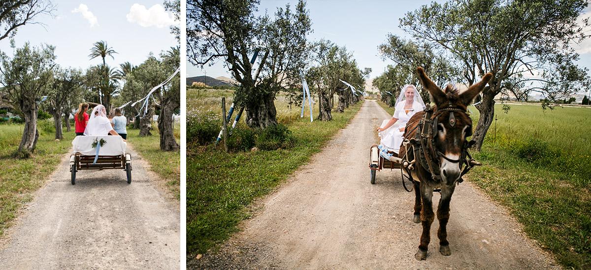 Braut auf Eselkarren auf dem Weg zur Trauung in Mallorca © Hochzeitsfotograf Berlin hochzeitslicht