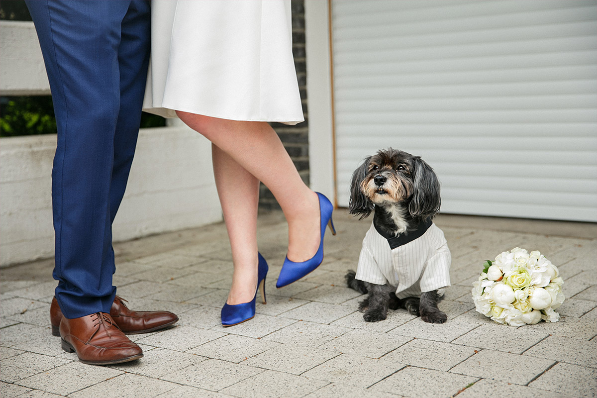 Modernes Brautpaarfoto mit Hund in Hochzeitsoutfit aufgenommen von professionellem Hochzeitsfotograf Berlin © Hochzeitsfotograf Berlin hochzeitslicht